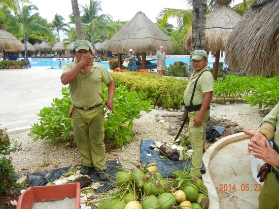 IBEROSTAR Paraiso Del Mar: Pessoal a preparar-se para servir água de coco