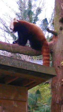 Paignton Zoo Environmental Park: Want to cuddle him!!