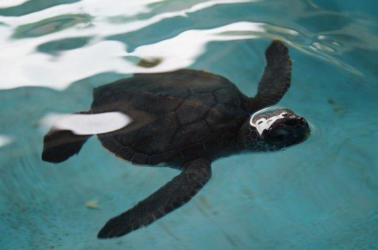 National Mexican Turtle Center (Centro Mexicano de la Tortuga): Están muy acostumbradas a la gente y salen a saludar