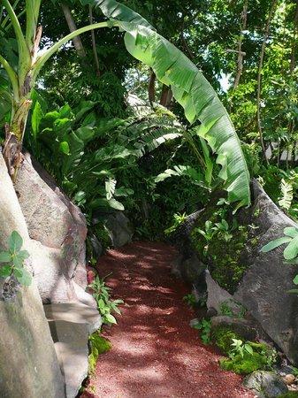 Zopango Island: Easy-access trail going around Zopango.