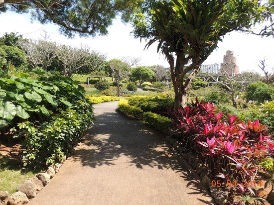 Tropical Dream Center : Caminho interno, com torre de observação ao fundo