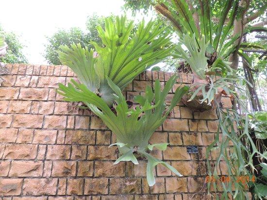 Tropical Dream Center : Samambaias