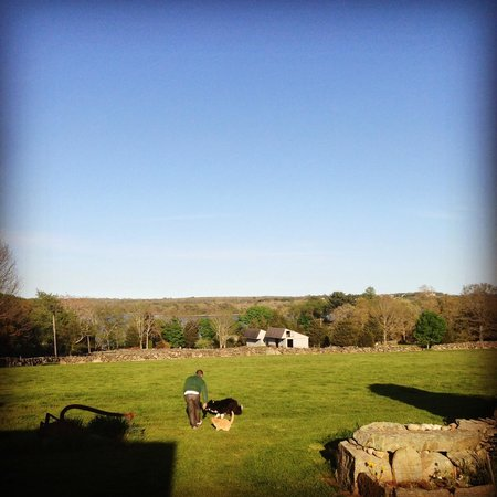 Stonehaven Family Farm: Cats and Dogs