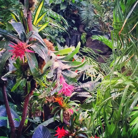 Landsea Tours and Adventures : Garden of Eden at Queen Elizabeth Conservatory