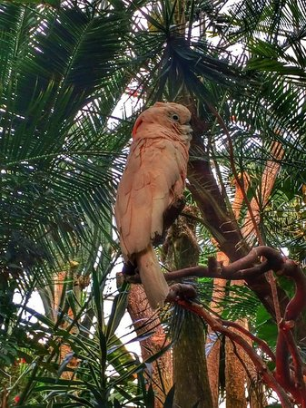 Landsea Tours and Adventures : Exotic Birds in Conservatory at Queen Elizabeth Park