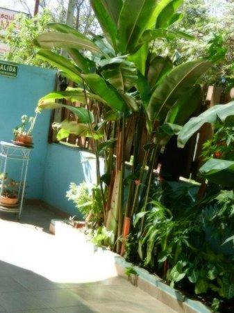 La Esquina del Bambu : pequeño jardin