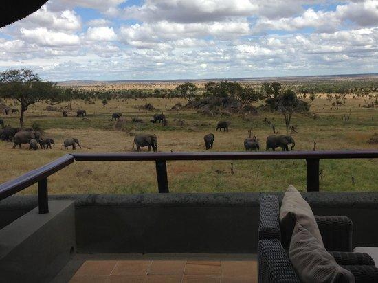 Four Seasons Safari Lodge Serengeti: Desde la terraza de la habitación