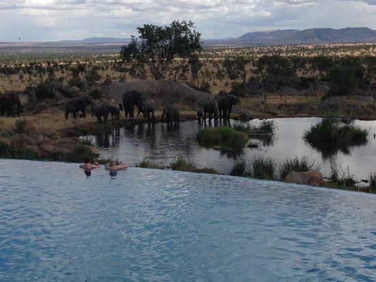 Four Seasons Safari Lodge Serengeti: Desde la piscina