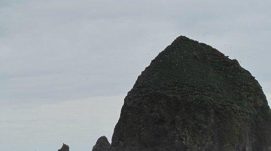 Cannon Beach: Haystack rock