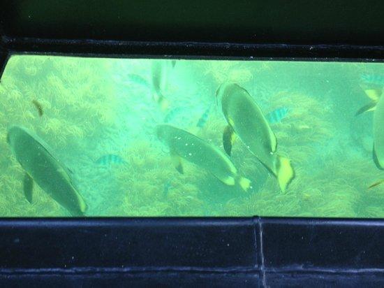 Big Cat Green Island Reef Cruises - Day Tour: Glass bottom boat