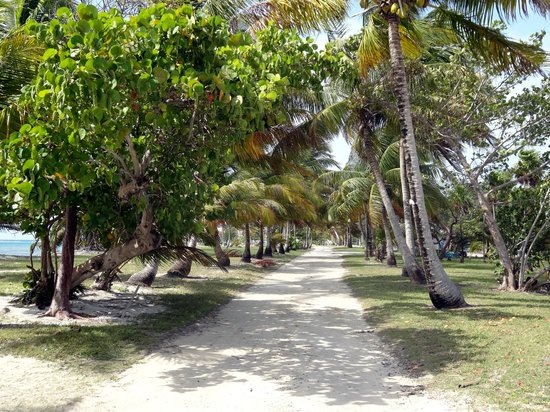Blackbird Caye Resort: By the lagoon