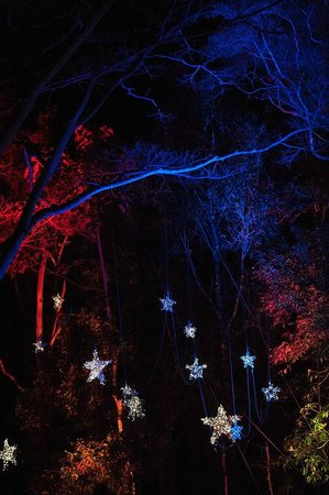Flames of the Forest: Starry starry night
