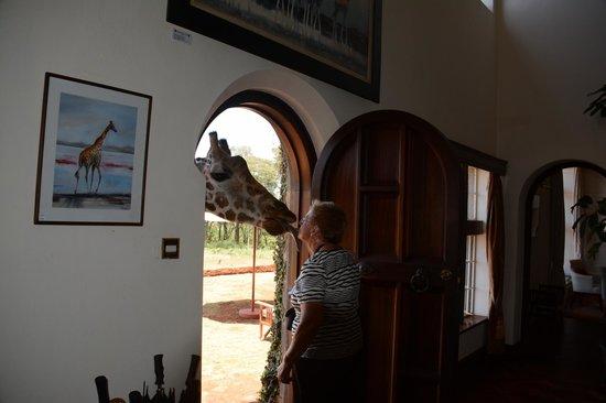 Giraffe Manor : Who's at the door?