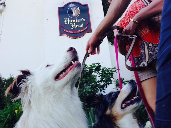 Hunter's Head Tavern : Boomer and Kacey -- 2 paws up!