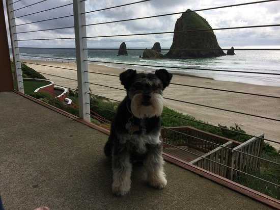 Hallmark Resort & Spa Cannon Beach: Sitting in the chairs on balcony - our dog loves it too!
