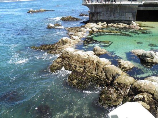 Jelly Fish Tank Picture Of Monterey Bay Aquarium