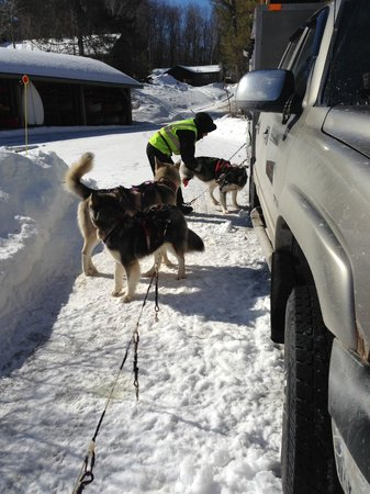 Valley Snow Dogz: Prepping the pups