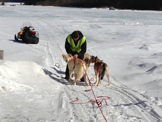 Valley Snow Dogz: connecting