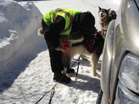 Valley Snow Dogz: checking feet