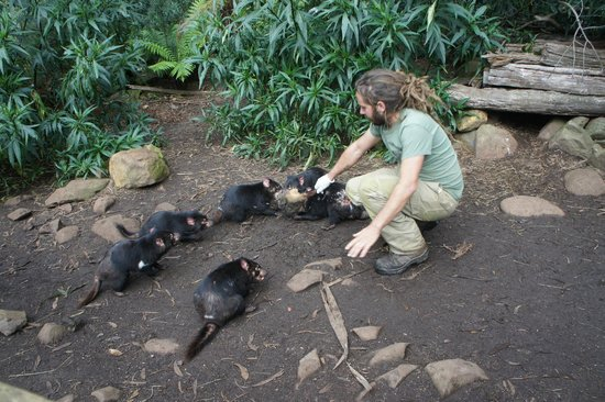 Trowunna Wildlife Sanctuary: Feeding Devils