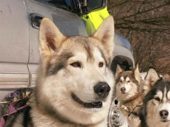 Valley Snow Dogz: Alert!
