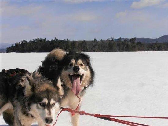 Valley Snow Dogz: I am so happy