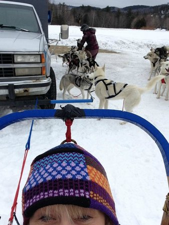 Valley Snow Dogz: They were so excited to get hooked up