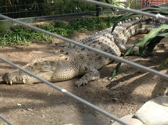 Cairns ZOOM and Wildlife Dome: Goliath