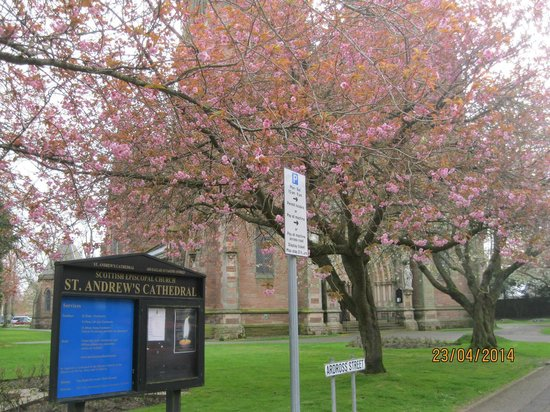 Inverness Cathedral: Lovely blossoming tree outside the Cathedral