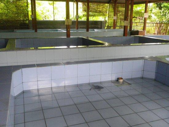 Turtle Conservation and Education Centre: Kolam untuk penyu-penyu kecil