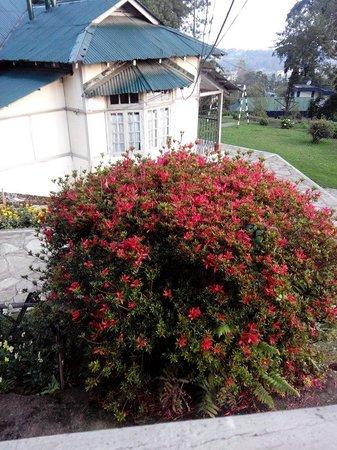 Pinewood Hotel: Backyard