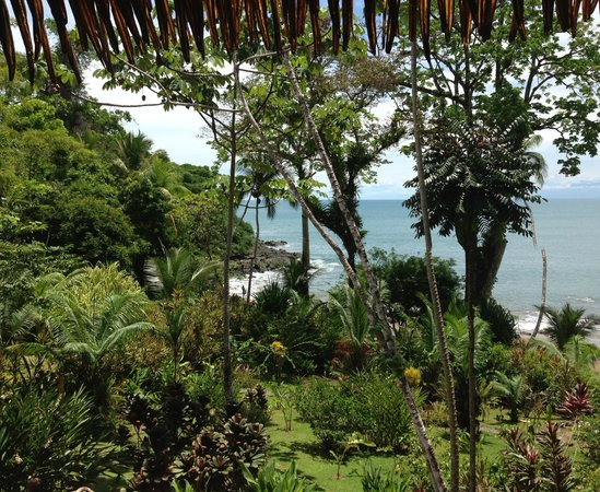 Copa de Arbol Beach and Rainforest Resort : view from the open air restaurant