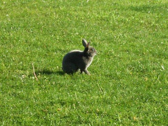 Guggisberg Swiss Inn : Very tame bunny