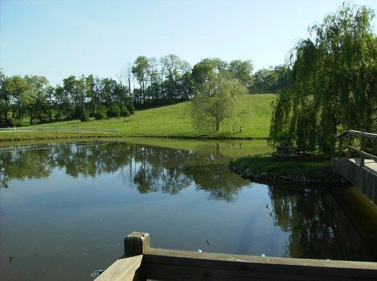 Guggisberg Swiss Inn : pond