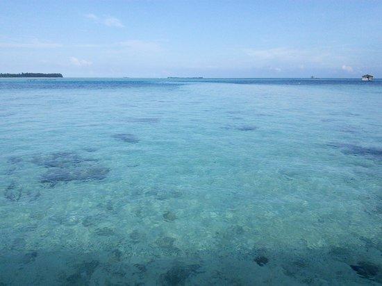 Wisma Apung Karimunjawa: the largest pool