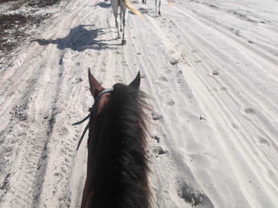 Horses On The Beach: Corpus Christi: Ace the cool horse