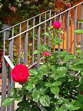 Hotel Mozart: Las flores del jardín...