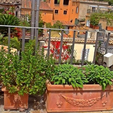 Hotel Mozart : Plantas Aromáticas...