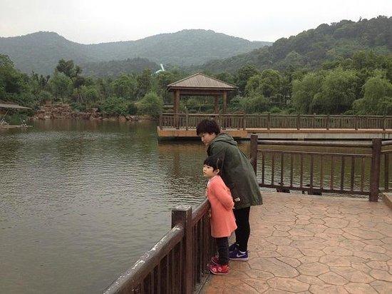 Wuxi Zoo: Swan Lake 1