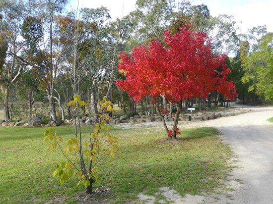 Autumn tones in surrounds