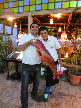 Shark Restaurant : Bring on the fresh fish