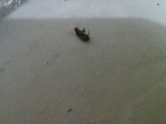 Comfort Inn: Dead bug on floor