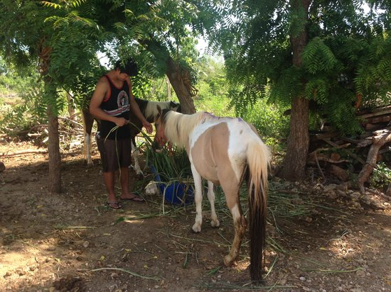 Bantayan Island Nature Park and Resort: Animals