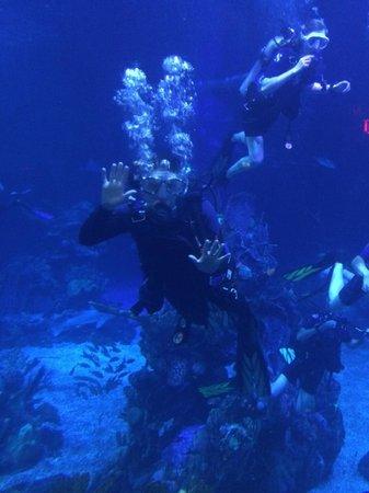 Epcot Divequest: Aquarium mime.