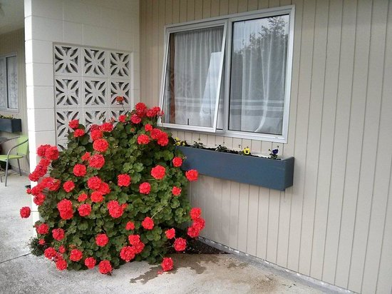 Aden Motel: Lovely flowers