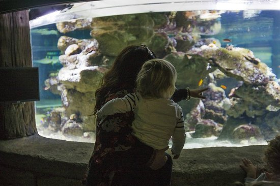 Manly Sea Life Sanctuary: Parent and Toddler weekdays