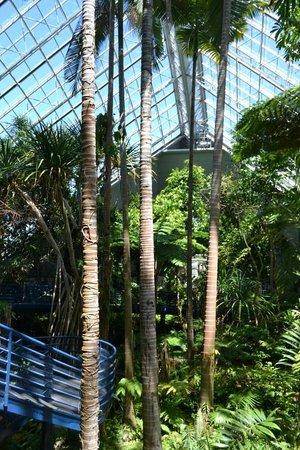 Adelaide Botanic Garden: Tropical Plants Enclosure