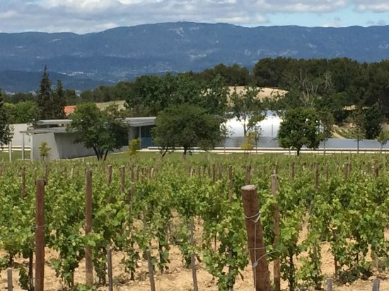 Chateau La Coste en Provence: View from the vineyards