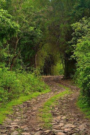 Jungle Retreat : Trail through the property