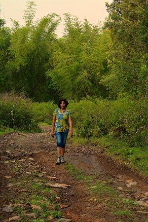 Jungle Retreat : A walk through the property